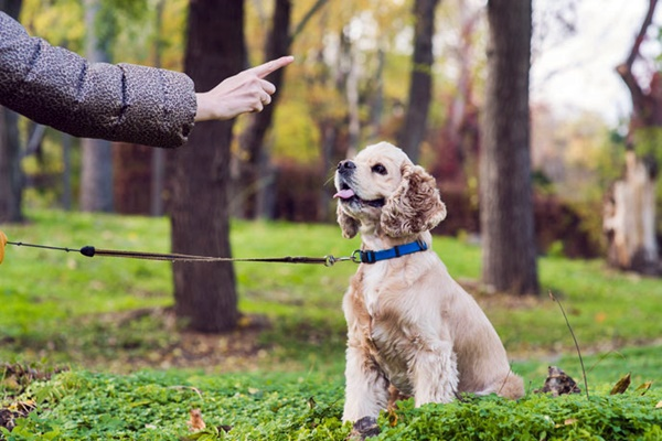 insegnare nuovi comandi al cane