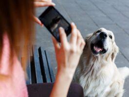 cane viene fotografato