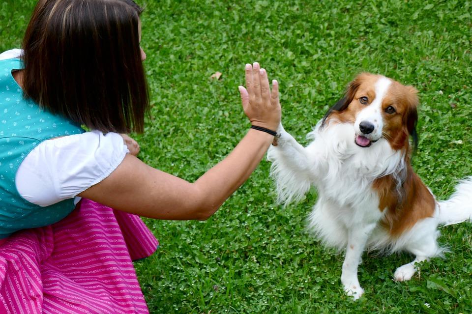 I cani comunicano con le zampe: ecco cosa dicono