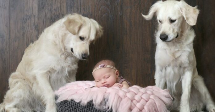 i-due-cani-entrano-nella-stanza-della-piccola-sorellina-per-cercare-aiuto