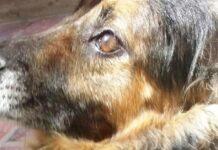 il-cane-fugge-prima-che-laereo-decolli-il-proprietario-e-disperato