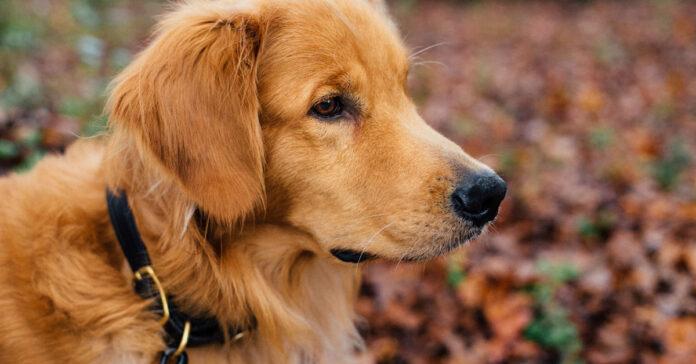cane con problema filatrosi