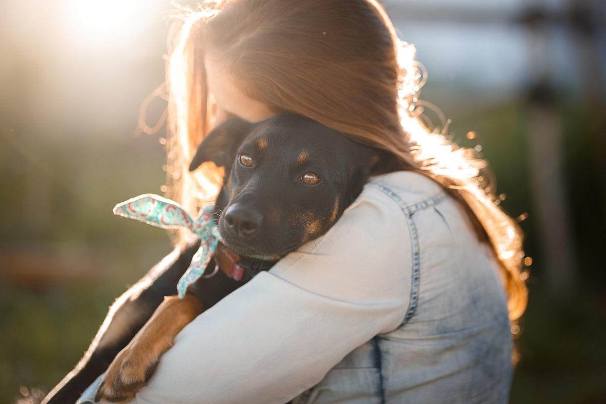 cane amato