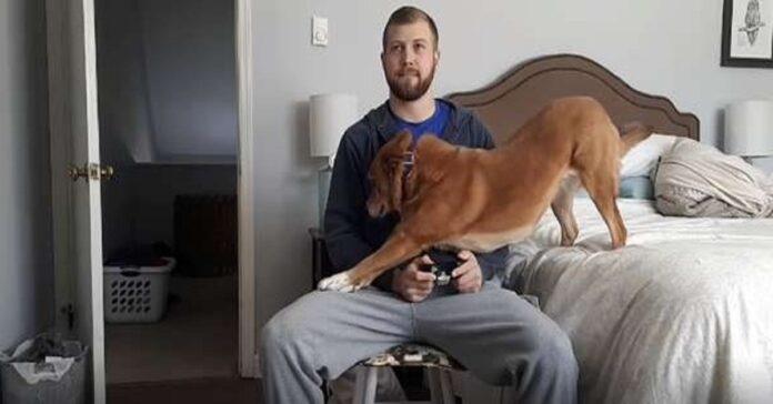 il-cane-ricorre-a-qualsiasi-mezzo-pur-di-ottenere-lattenzione-del-ragazzo