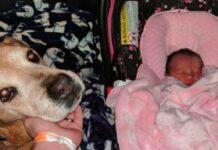il-cane-rimane-in-vita-abbastanza-a-lungo-da-incontrare-la-piccola-neonata