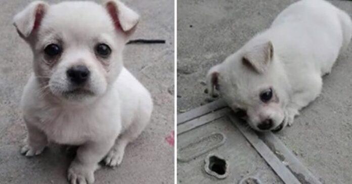 il-cucciolo-non-vuole-allontanarsi-dal-lato-della-strada-per-un-solo-motivo