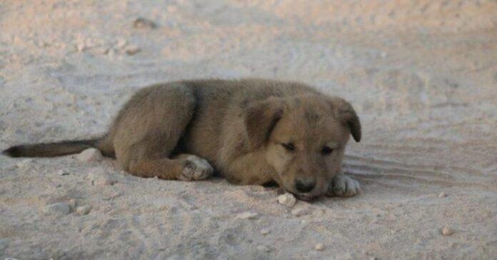 il-cucciolo-viene-salvato-fra-le-macerie-da-un-fotografo-coraggioso