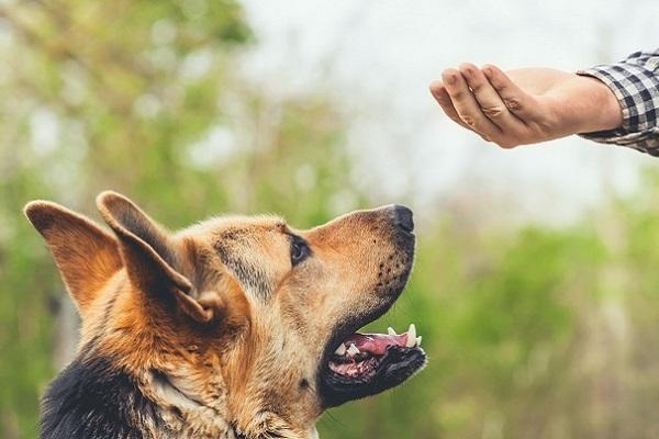 cane in ascolto