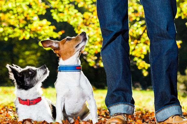 cani guardano padrone