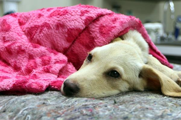 cane sente freddo