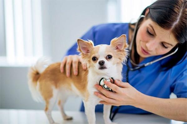 Lesione atriale nel cane: cos'è e quali sono i trattamenti
