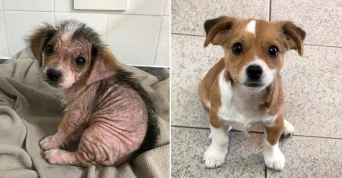 la-cagnolina-con-la-rogna-viene-salvata-la-sua-trasformazione-e-incredibile
