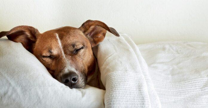 la-scienza-lo-conferma-dormire-con-un-cane-migliora-la-qualita-del-sonno
