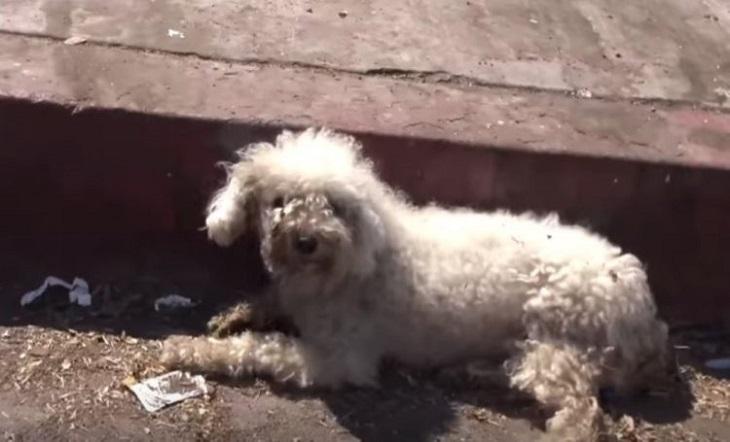 Un cane rassegnato ormai da ore viene salvato da una chiamata