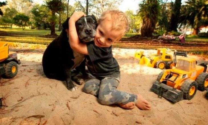 Il cane riesce nell'impresa di salvare un bambino ormai in fin di vita