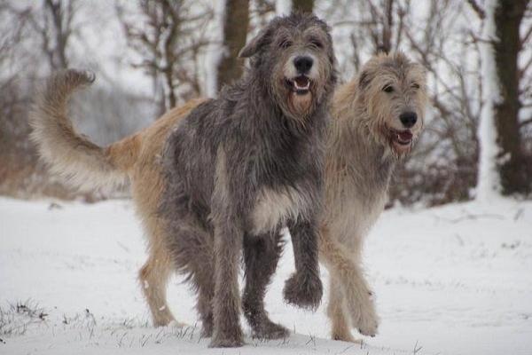 cani che vivono meno