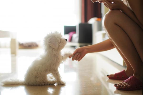 Malattia di Legg-Calvè-Perthes nel cane: cosa bisogna sapere