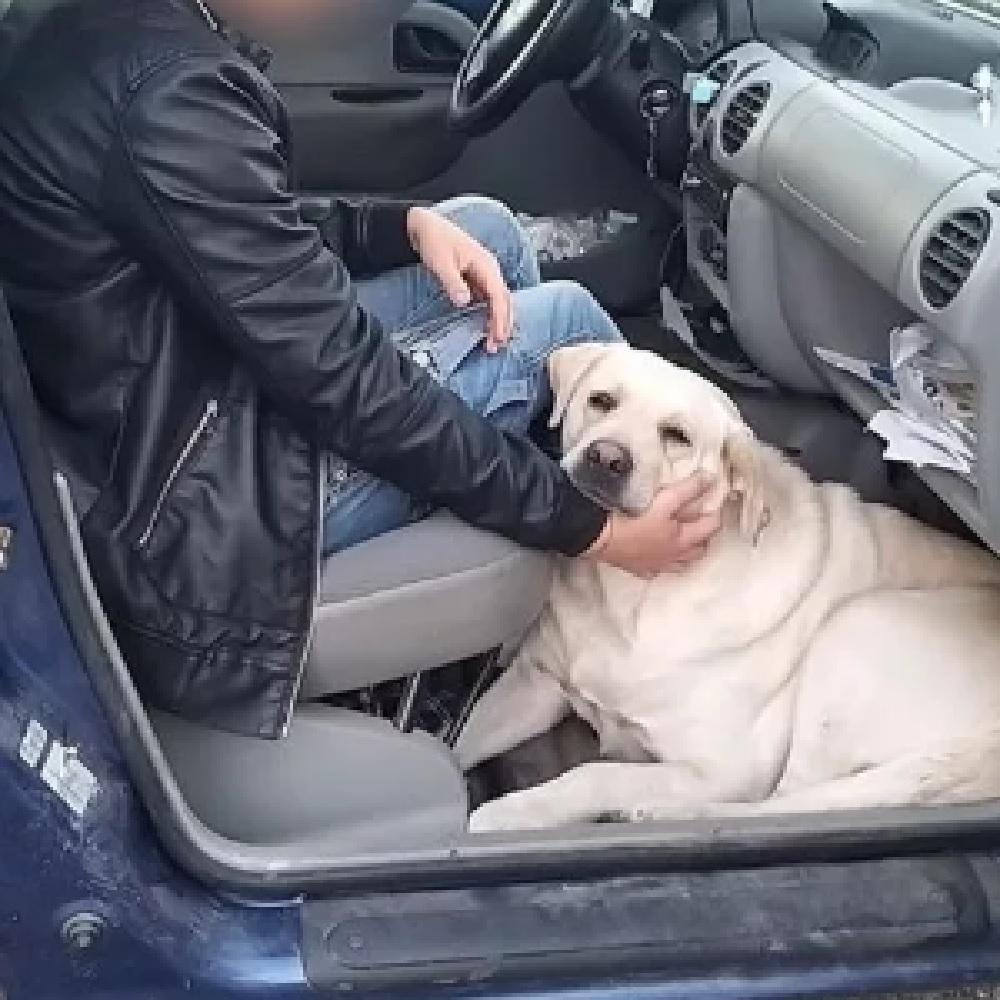 Cosenza, dopo il funerale abbandonano il cane nel cimitero