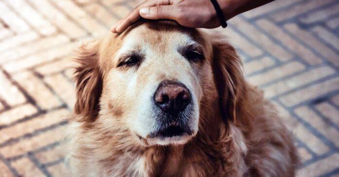 cane che si fa coccolare