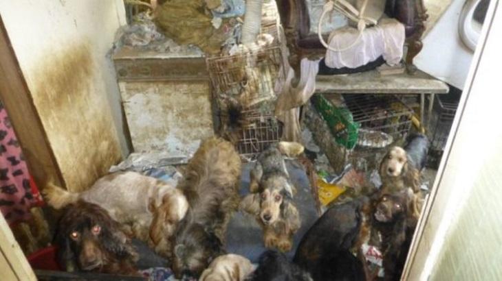 54 cani chiusi in gabbia, i soccorritori li hanno salvati dal primo all'ultimo