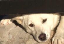ogni-giorno-il-cane-tenta-di-entrare-in-casa-per-farsi-una-nuova-famiglia