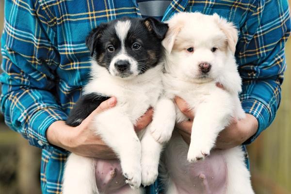 Omega 3 per cani: a cosa servono e dove trovarli