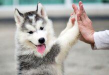 giocare con il cucciolo