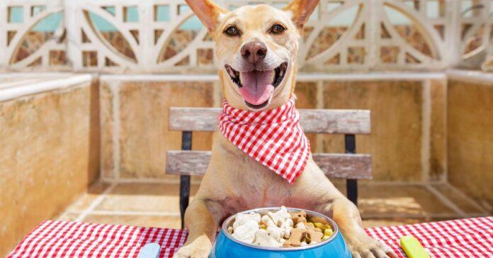 cane mangia a tavola