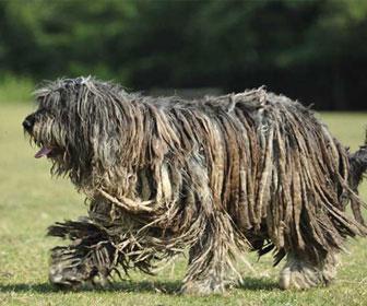 10 razze di cani stravaganti e originali: le più singolari in assoluto