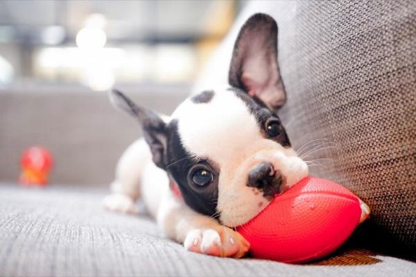 Perché i cuccioli sono così teneri? Ecco come Fido ti ha rubato il cuore