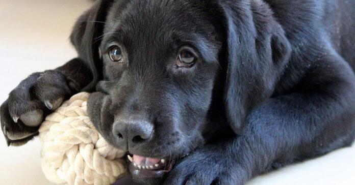 Il cane non prende gli oggetti bene? Ecco come rimediare