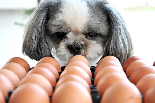 cane mangia le uova