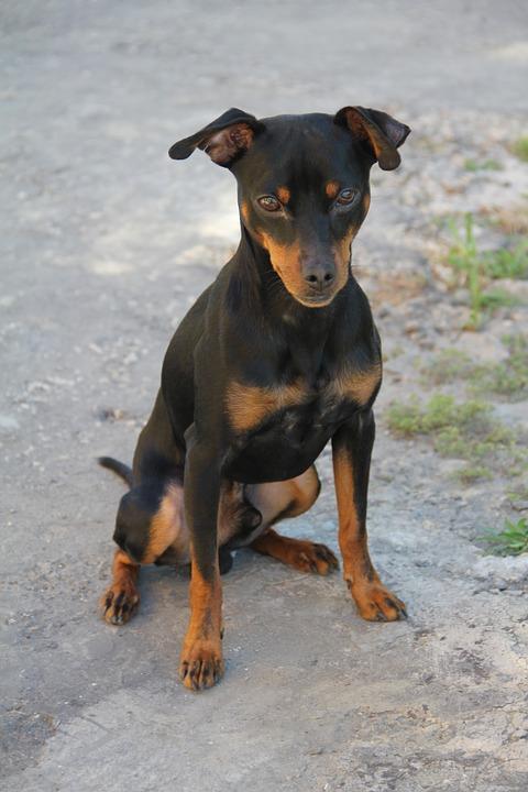 Cani sui 5 kg, quali sono?