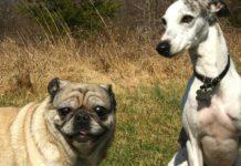 Cani sui 15 kg: quali sono?