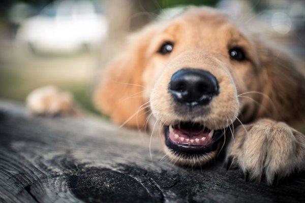 Quanti denti hanno i cani? Viaggio nella bocca di Fido