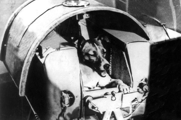 10 razze di cani che hanno aiutato l'umanità (e i quattrozampe più famosi)