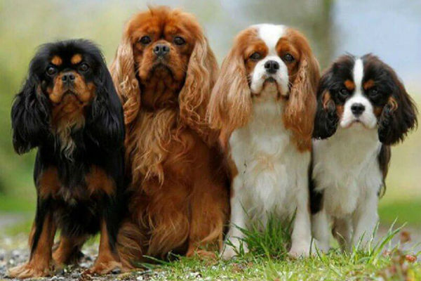 quattro cani