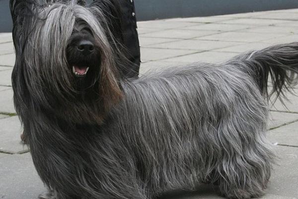 Razze di cani nane: le più piccole esistenti