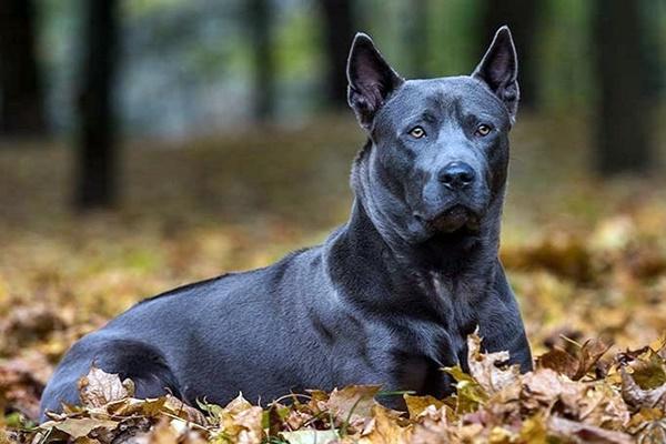 Quali sono le razze di cani più rare in assoluto?