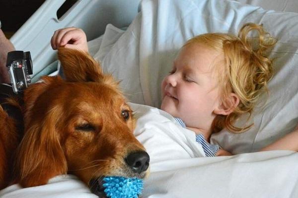 cane in corsia di ospedale