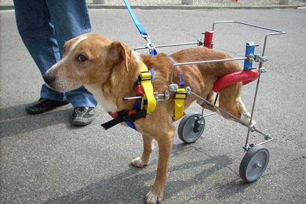 cane con carrozzina