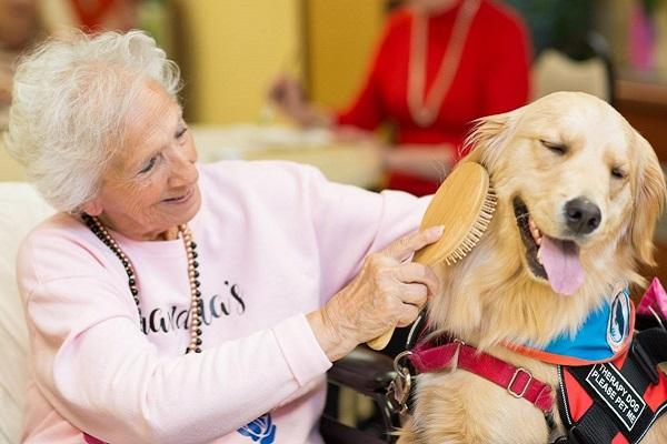 cane golden retriever con anziana