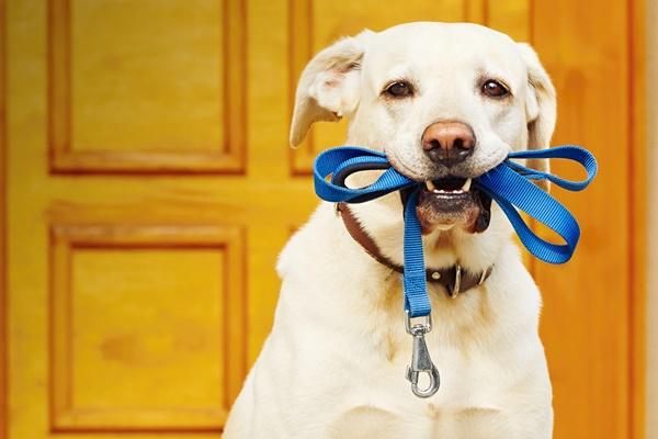 Ritmo circadiano del cane: come si svolge la giornata di Fido