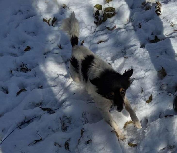 Cane abbandonato sulla gelida neve, viene salvato da due volontari