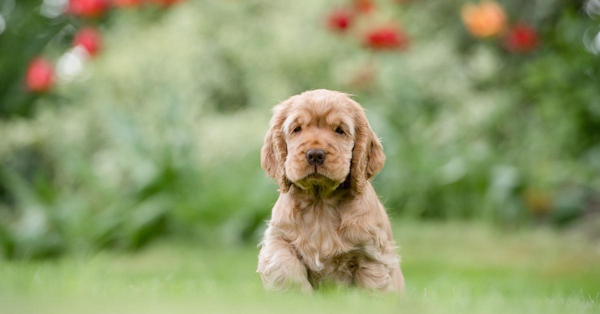 cane molto carino
