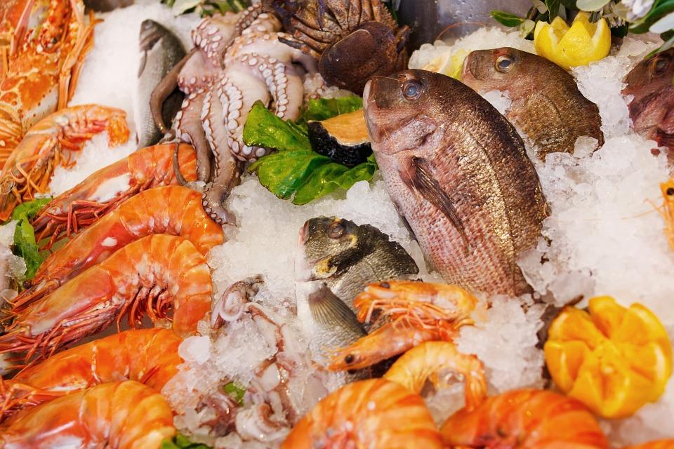 Cani e frutti di mare: quali evitare, quali includere nella dieta