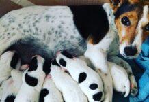 cagna che allatta cuccioli