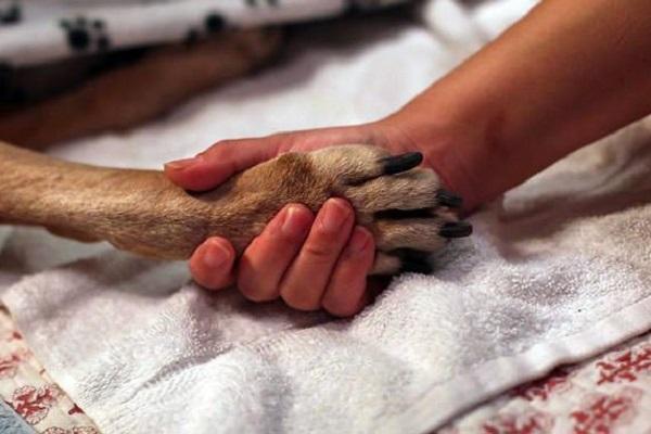 zampa di cane e mano umana