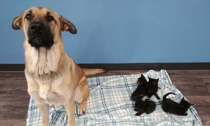 Cane randagio salva eroicamente la vita di 5 gattini