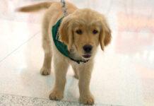 scegliere un cucciolo di cane in salute